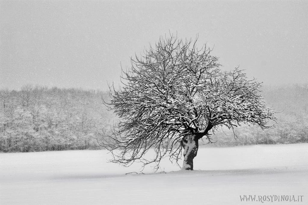 Fotografie paesaggi bianco e nero rosy di noia for Paesaggio invernale disegno