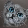Gatto dagli occhi blu