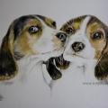 Coppia di beagle